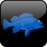 UK Fishing News &amp; Reports App