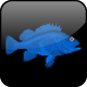 UK Fishing News & Reports App